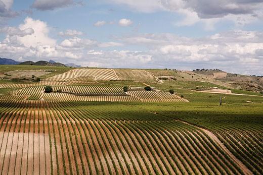 Vineyard in La Rioja, Spain : Stock Photo
