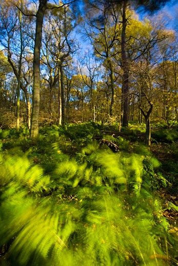 Stock Photo: 1828R-67517 Ferns in Forest, Newcastle Upon Tyne, Tyne and Wear, England, United Kingdom