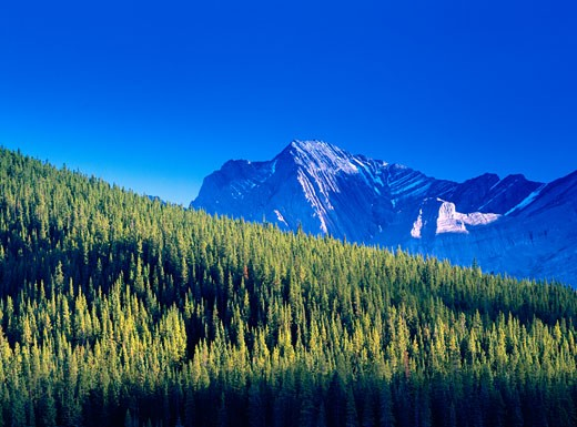 Stock Photo: 1828R-6758 Kananaskis Country, Peter Lougheed Provincial Park, Alberta, Canada