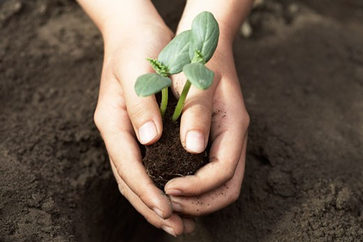 Child Planting Cucumber Seedling : Stock Photo