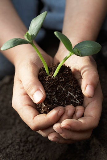 Stock Photo: 1828R-67783 Child Planting Cucumber Seedling