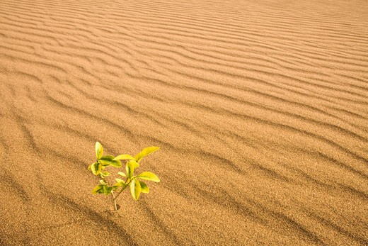 Stock Photo: 1828R-68111 Small Plant Growing in the Desert