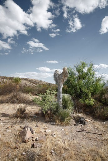 Stock Photo: 1828R-68415 Presidio, Presidio County, Texas, USA
