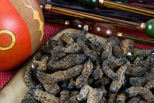 Stock Photo: 1828R-70145 Plate of Dried Mopanie Worms