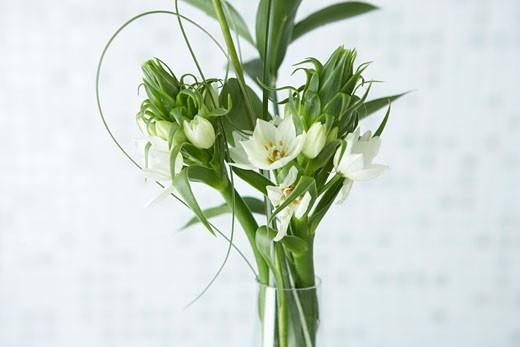 Stock Photo: 1828R-71025 Still Life of Flowers