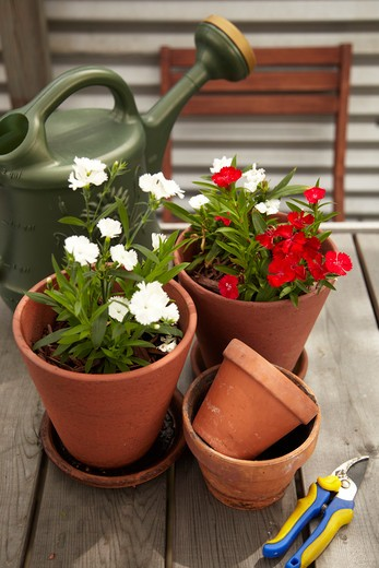 Potted Plants and Gardening Equipment on Roof Garden Table : Stock Photo