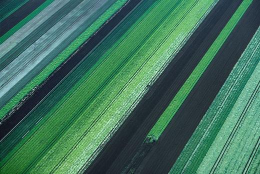 Farmland, Holland Marsh, Ontario, Canada    : Stock Photo