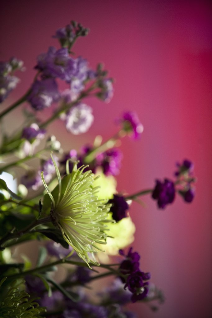 Stock Photo: 1828R-76426 Close-up of Flowers