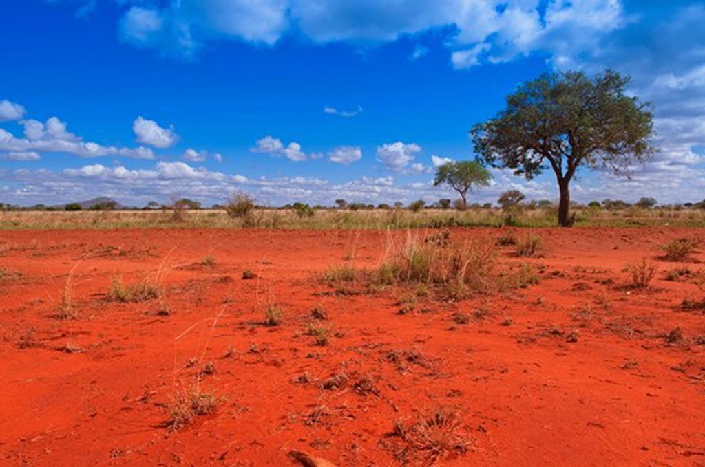 Stock Photo: 1828R-76690 Tsavo National Park, Kenya