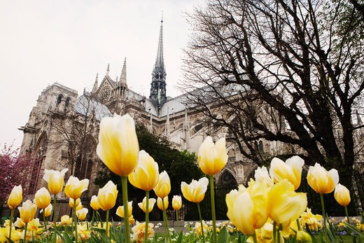 Stock Photo: 1828R-77041 Notre Dame Cathedral, Ile de la Cite, Paris, France