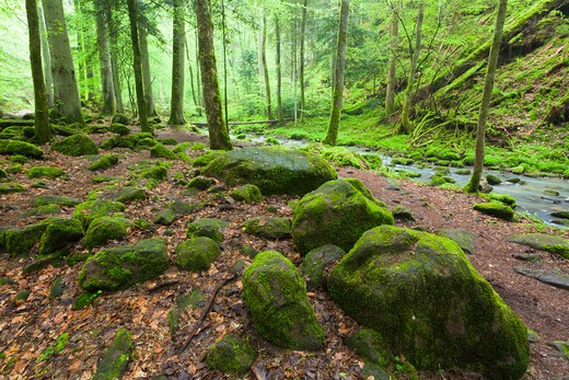 Monbach Valley, Black Forest, Baden-Wurttemberg, Germany : Stock Photo