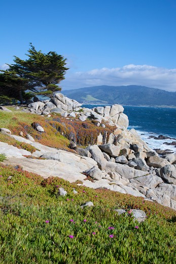 Pebble Beach, 17 Mile Drive, Pacific Ocean, Monterey, California, USA : Stock Photo