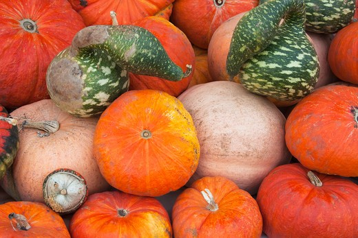 Stock Photo: 1828R-78577 Variety of Pumpkins