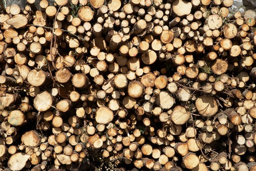 Woodpile, Krageroe, Telemark County, Eastern Norway, Norway : Stock Photo