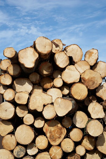 Stock Photo: 1828R-78901 Woodpile, Krageroe, Telemark County, Eastern Norway, Norway