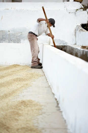 Stock Photo: 1828R-79253 Washing and Drying Coffee Beans, Finca Vista Hermosa Coffee Plantation, Agua Dulce, Huehuetenango Department, Guatemala