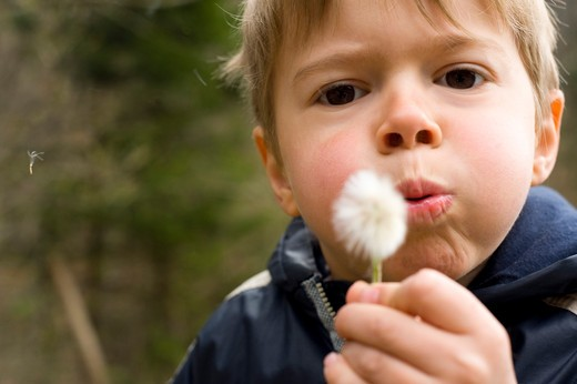 Stock Photo: 1828R-79842 Boy Blowing on Dandelion, Salzburg, Salzburger Land, Austria