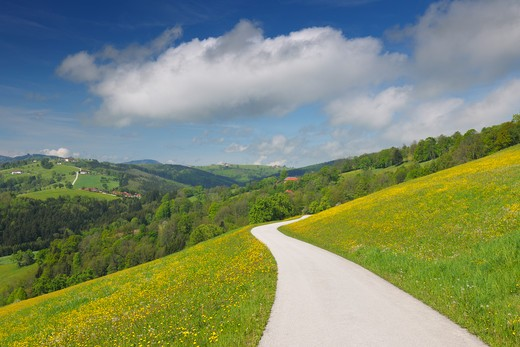 Stock Photo: 1828R-80511 Meadow with Road, Mostviertel, Lower Austria, Austria