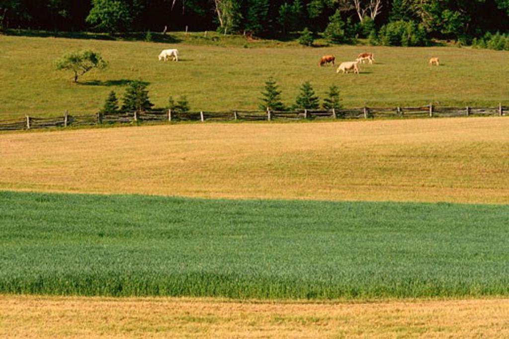 Farm in Central Hampstead, New Brunswisk, Canada    : Stock Photo