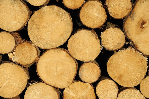 Stock Photo: 1828R-80755 Stack of Tree Trunks, Germany