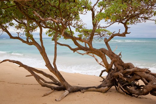 Stock Photo: 1828R-81146 Paia Bay Beach, Maui, Hawaii, USA