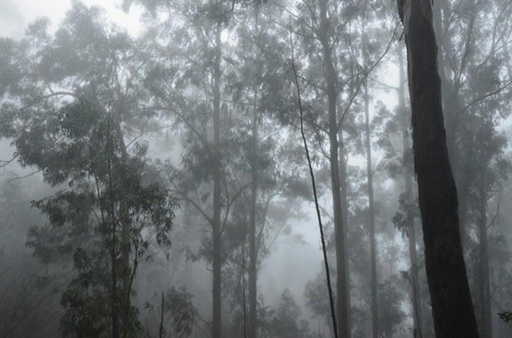 Forest, Achadas da Cruz, Porto Moniz, Madeira, Portugal : Stock Photo