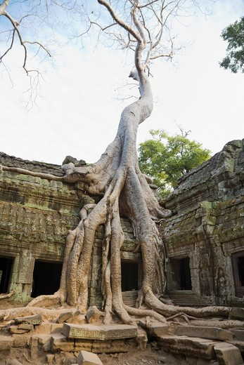 Stock Photo: 1828R-82027 12th - 13th Century Khmer Temple at Ta Prohm, Angkor, Cambodia