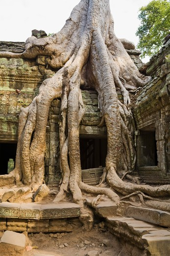 Stock Photo: 1828R-82028 12th - 13th Century Khmer Temple at Ta Prohm, Angkor, Cambodia