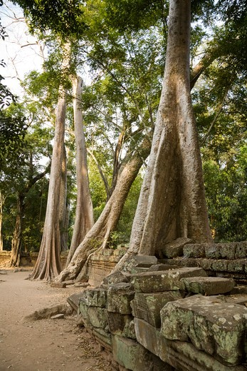 Stock Photo: 1828R-82034 12th - 13th Century Khmer Temple at Ta Prohm, Angkor, Cambodia