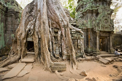 Stock Photo: 1828R-82037 12th - 13th Century Khmer Temple at Ta Prohm, Angkor, Cambodia