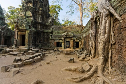 Stock Photo: 1828R-82038 12th - 13th Century Khmer Temple at Ta Prohm, Angkor, Cambodia