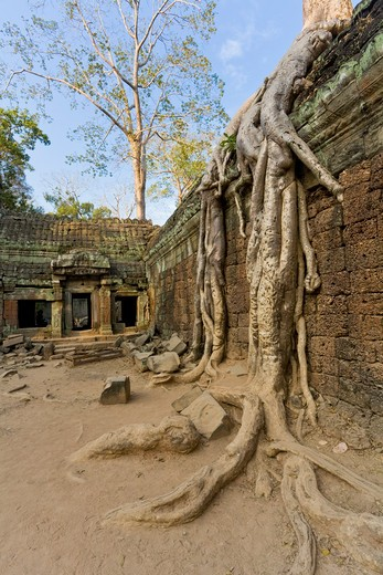 Stock Photo: 1828R-82039 12th - 13th Century Khmer Temple at Ta Prohm, Angkor, Cambodia