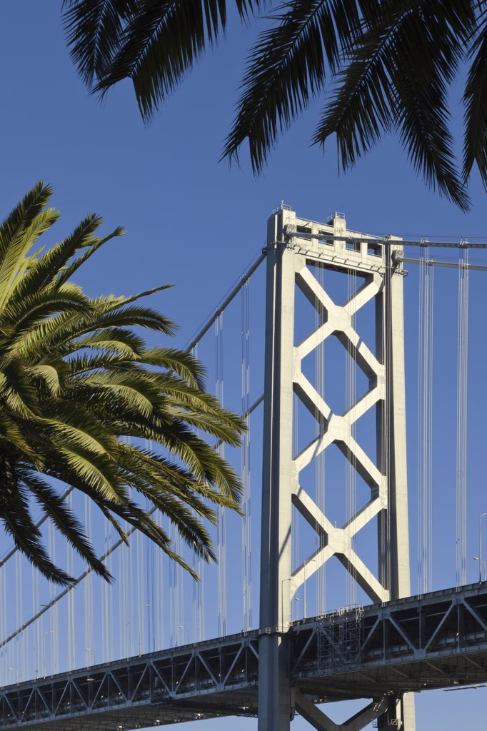Stock Photo: 1828R-82987 Bay Bridge with Palm Trees, Embarcadero, San Francisco, California, USA