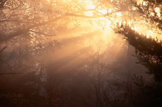 Stock Photo: 1828R-8369 Sun Through Trees and Early Morning Mist, Ontario, Canada