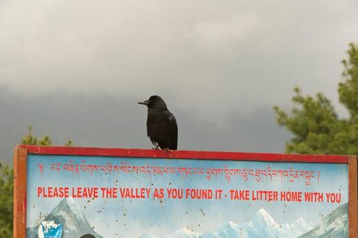 Stock Photo: 1828R-84064 Raven on a Sign, Bhutan