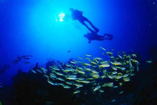 Stock Photo: 1828R-8463 Divers and School of Bream