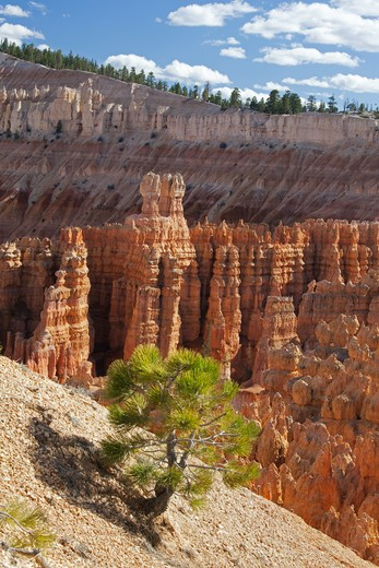 Stock Photo: 1828R-84803 Bryce Canyon National Park, Utah, USA