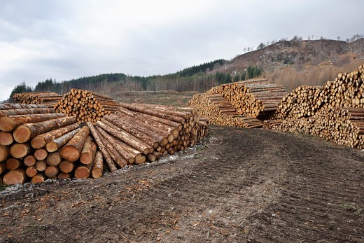 Stock Photo: 1828R-86589 Piles of Logs, Scotland