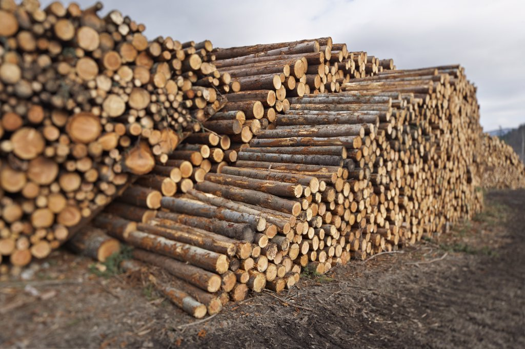 Stock Photo: 1828R-86594 Piles of Logs, Scotland