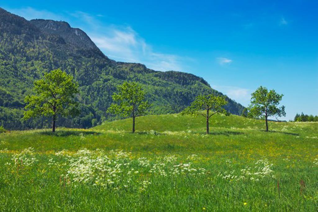 Meadow with Trees, Bad Ischl, Upper Austria, Austria : Stock Photo