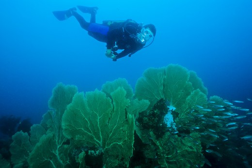 Stock Photo: 1828R-86887 Scuba Diver, Madagascar