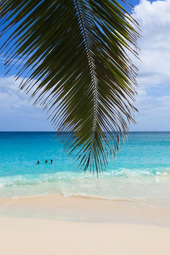 Coconut Palm Tree Frond and Indian Ocean at Anse Georgette, Praslin Island, Seychelles : Stock Photo