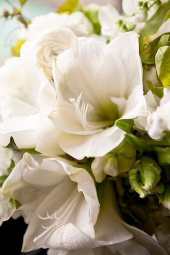 Stock Photo: 1828R-87811 Close-up of Bridal Bouquet