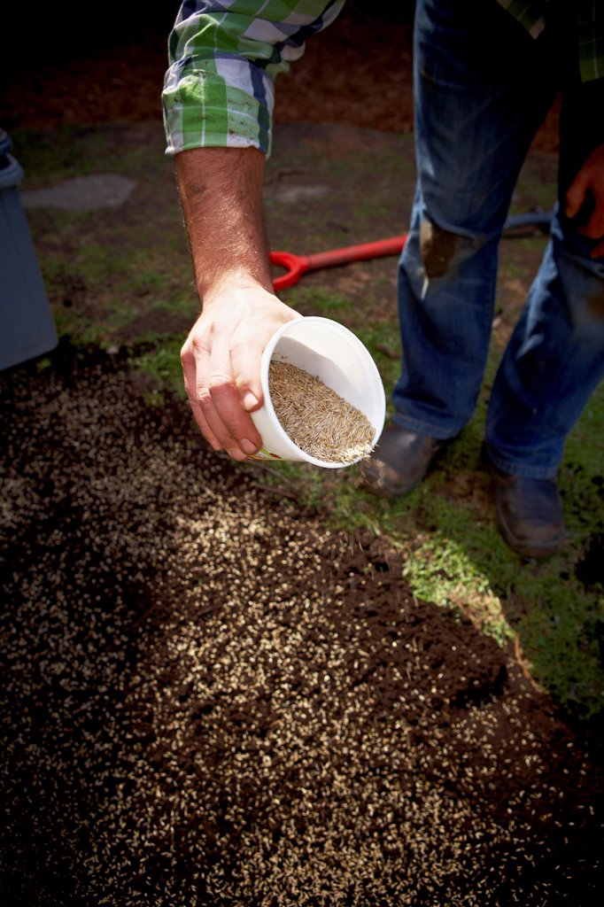 Gardener spreading Grass Seed, Toronto, Ontario, Canada : Stock Photo