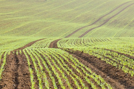 Sowed Field in Early Spring, Franconia, Bavaria, Germany : Stock Photo