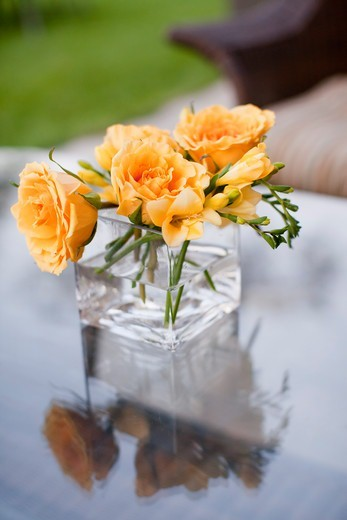 Stock Photo: 1828R-88123 Roses in Vase, Muskoka, Ontario, Canada