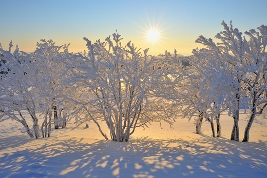 Snow Covered Trees with Sun, Schneeekopf, Gehlberg, Thuringia, Germany : Stock Photo