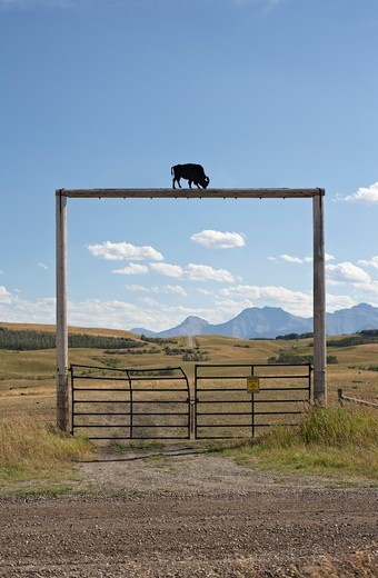 Stock Photo: 1828R-88812 Gate at Tacarsey Bison Ranch, Pincher Creek, Alberta, Canada