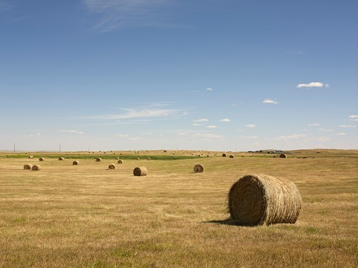 Hay Bales, Pincher Creek, Alberta, Canada : Stock Photo