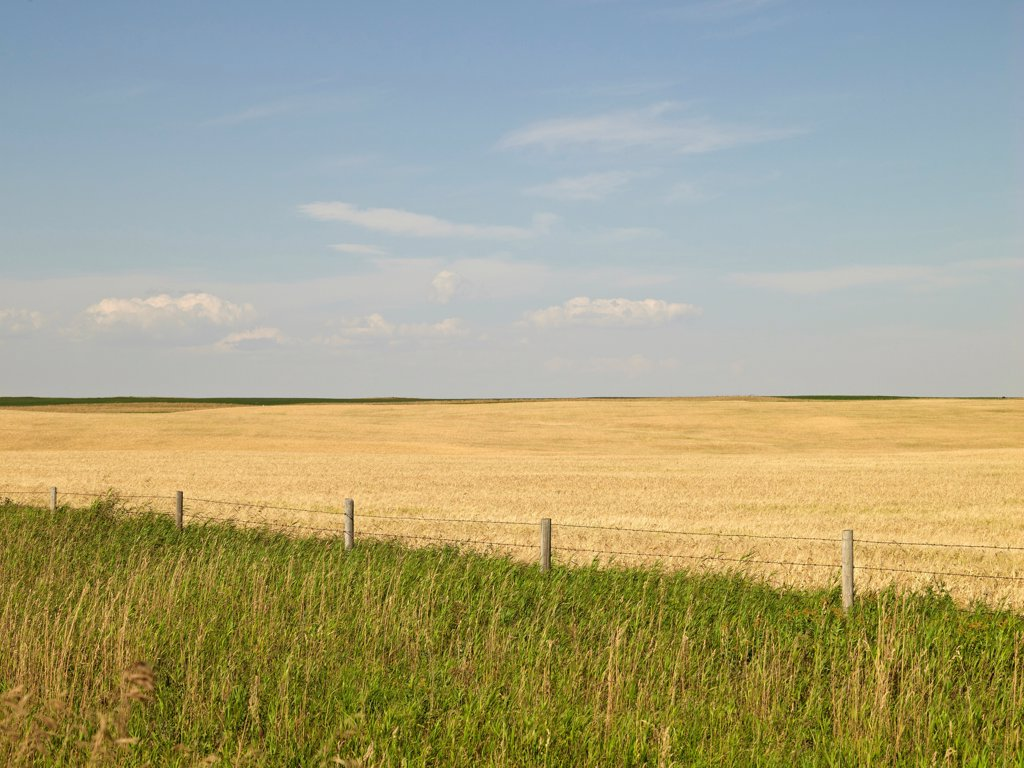 Stock Photo: 1828R-89369 Wheat Field ready for Harvest, Pincher Creek, Alberta, Canada